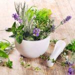 Травы, способствующие похудению