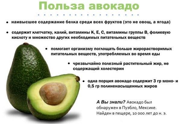 Авокадо: полезные свойства для похудения