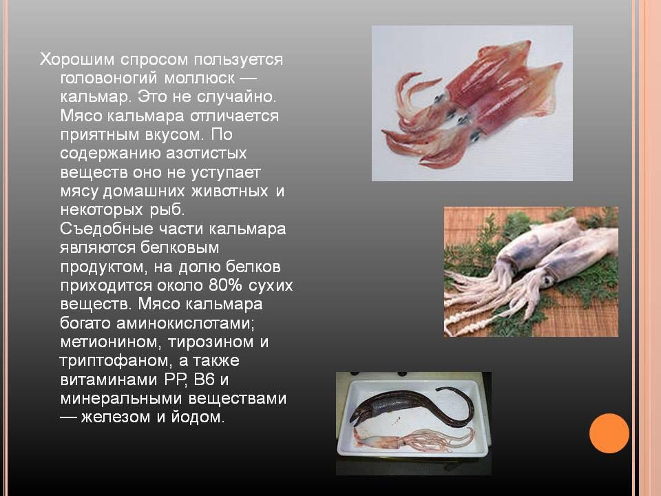 Польза кальмаров для организма