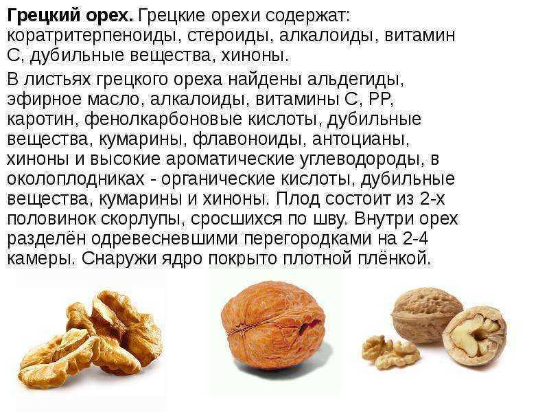 Грецкий орех: чем полезен