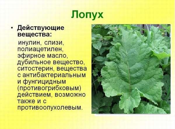Какие травы для похудения самые эффективные