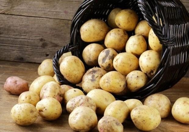 Сколько калорий в картофеле на 100 грамм