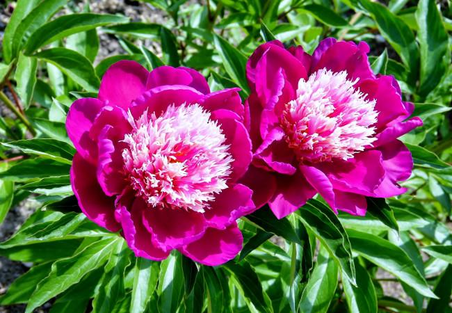 Подбор красивых цветов на букет